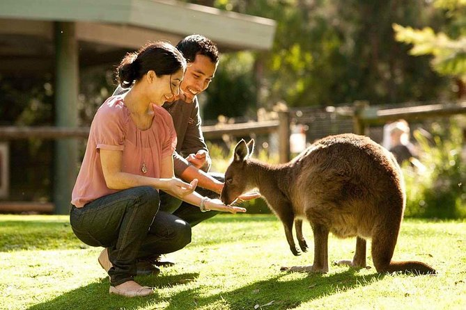 Very Best of Perth Tour - Wildlife Park  City Highlights Tour - Accommodation Mount Tamborine
