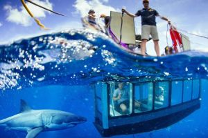 White Shark Tour with Optional Cage Dive from Port Lincoln - Accommodation Mount Tamborine