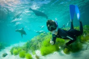 Half-Day Sea Lion Snorkeling Tour from Port Lincoln - Accommodation Mount Tamborine