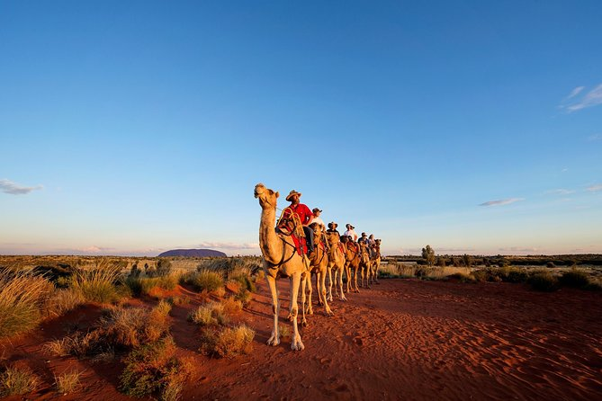 Uluru Camel Express Sunrise or Sunset Tours - Accommodation Mount Tamborine