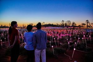 Uluru Field of Light Sunrise Tour - Accommodation Mount Tamborine