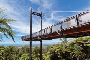 Forest Sky Pier Sealy Lookout - Accommodation Mount Tamborine