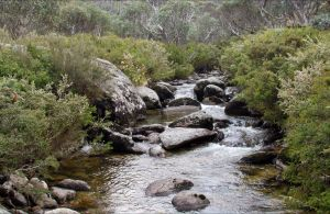 Thredbo River Track - Accommodation Mount Tamborine