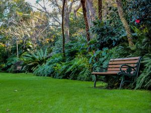 EG Waterhouse National Camellia Gardens - Accommodation Mount Tamborine