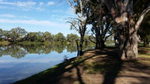 Murray River National Park - Katarapko - Accommodation Mount Tamborine