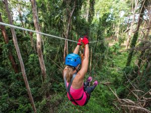 TreeTop Challenge - Sunshine Coast - Accommodation Mount Tamborine