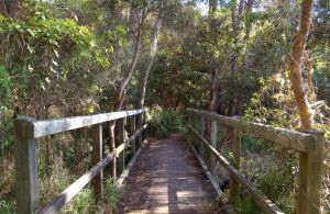Awaba Bay Foreshore Walk - Accommodation Mount Tamborine