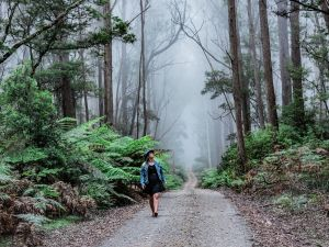 The Corn Trail Walking Track - Accommodation Mount Tamborine