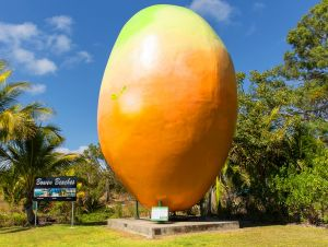 Big Mango - Accommodation Mount Tamborine