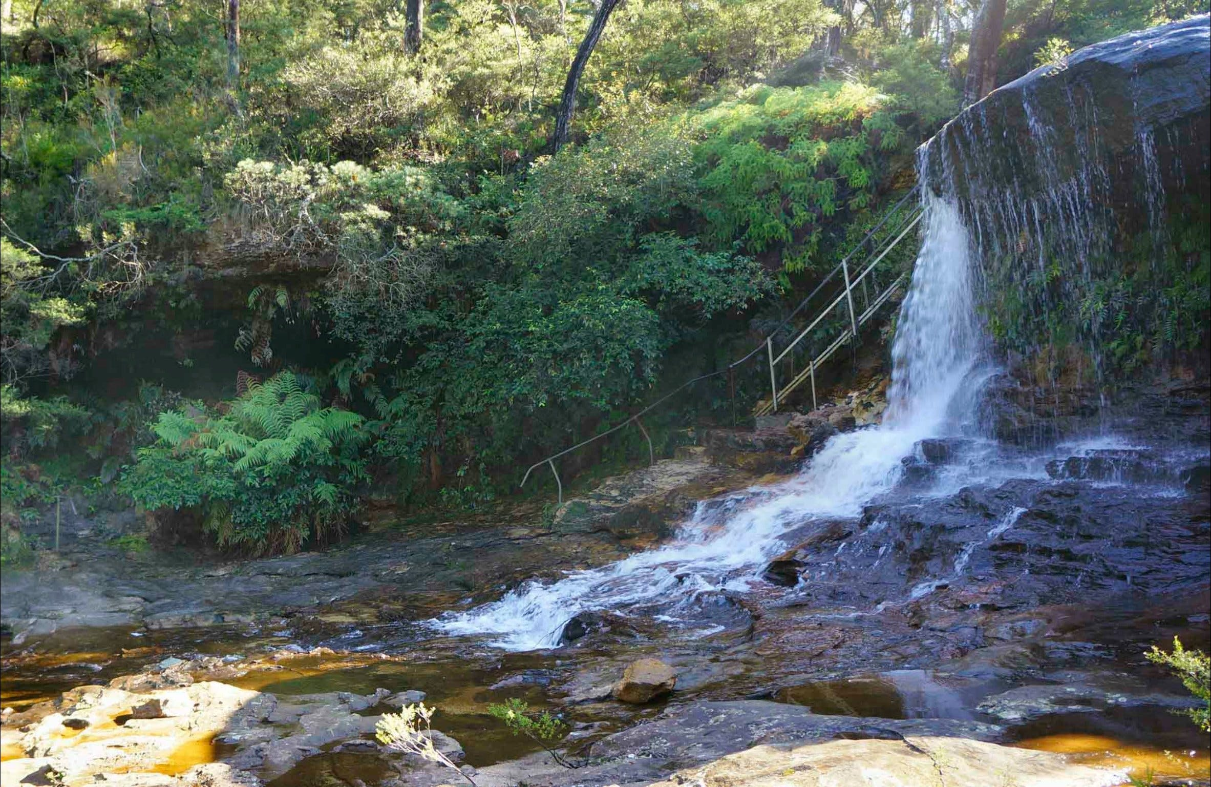 Charles Darwin walk - Accommodation Mount Tamborine