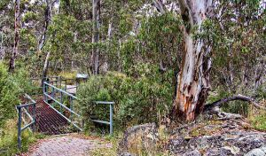 Sawpit Walking Track - Accommodation Mount Tamborine