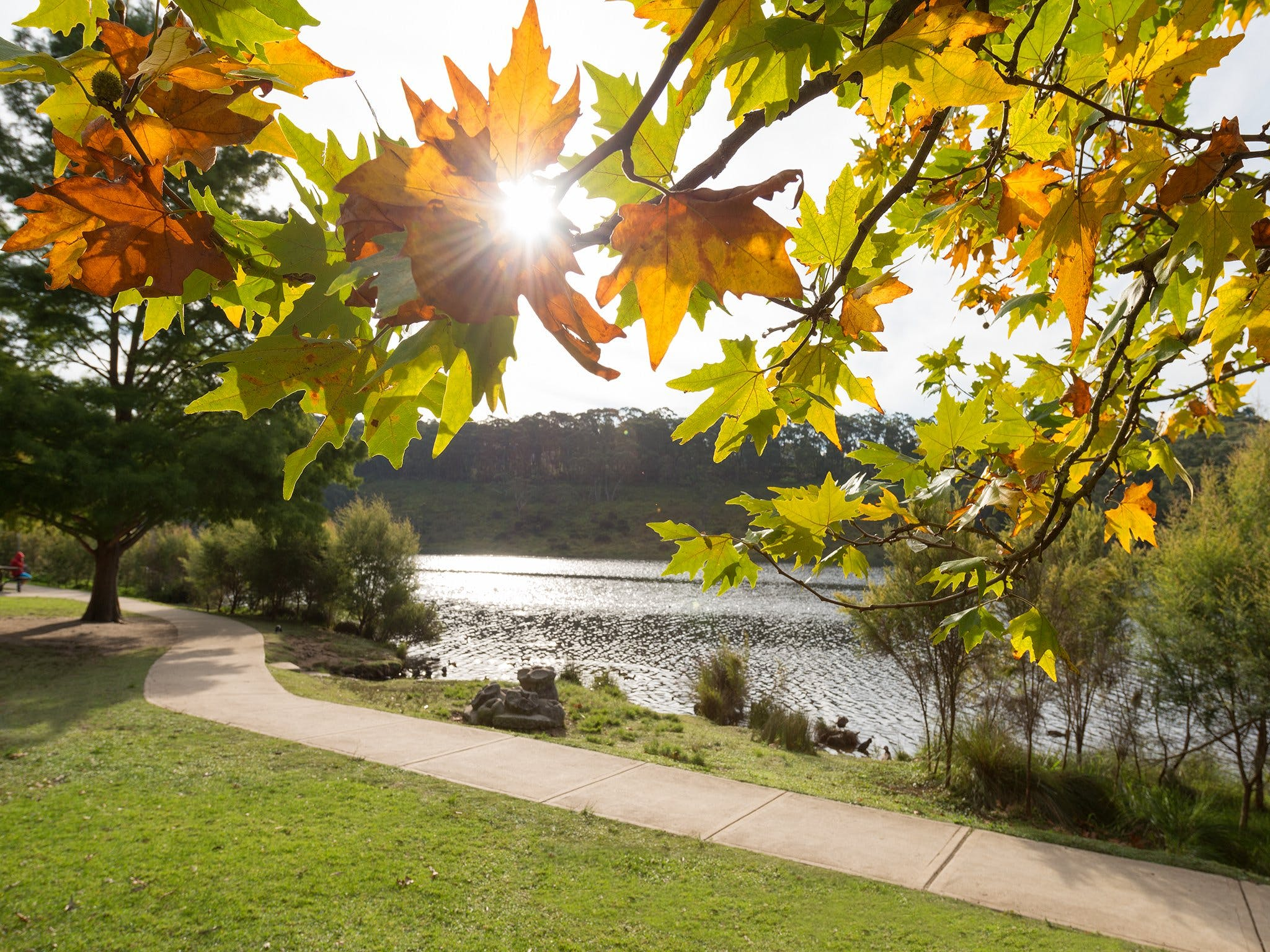 Wentworth Falls Lake - Accommodation Mount Tamborine