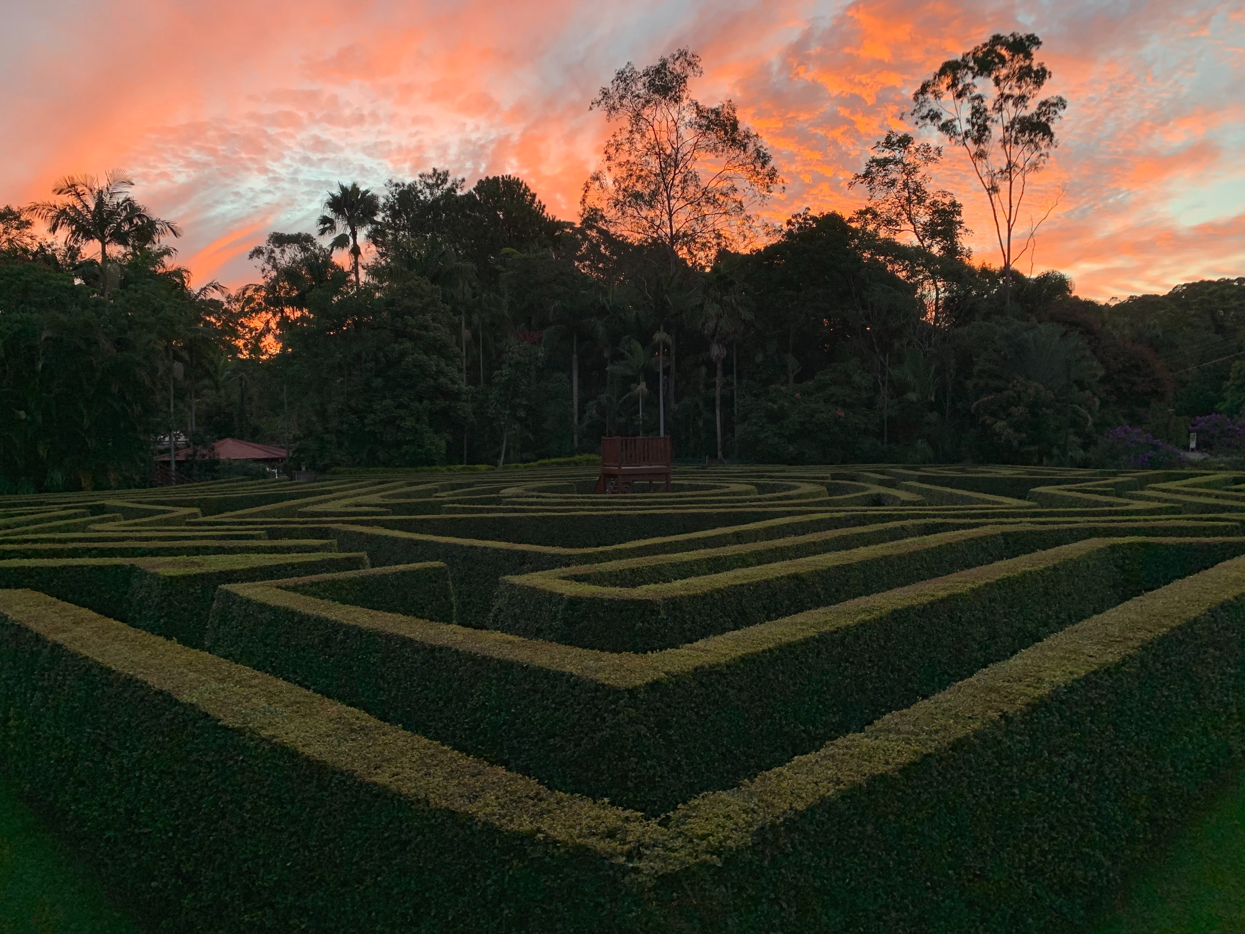 Bellingham Maze - Accommodation Mount Tamborine