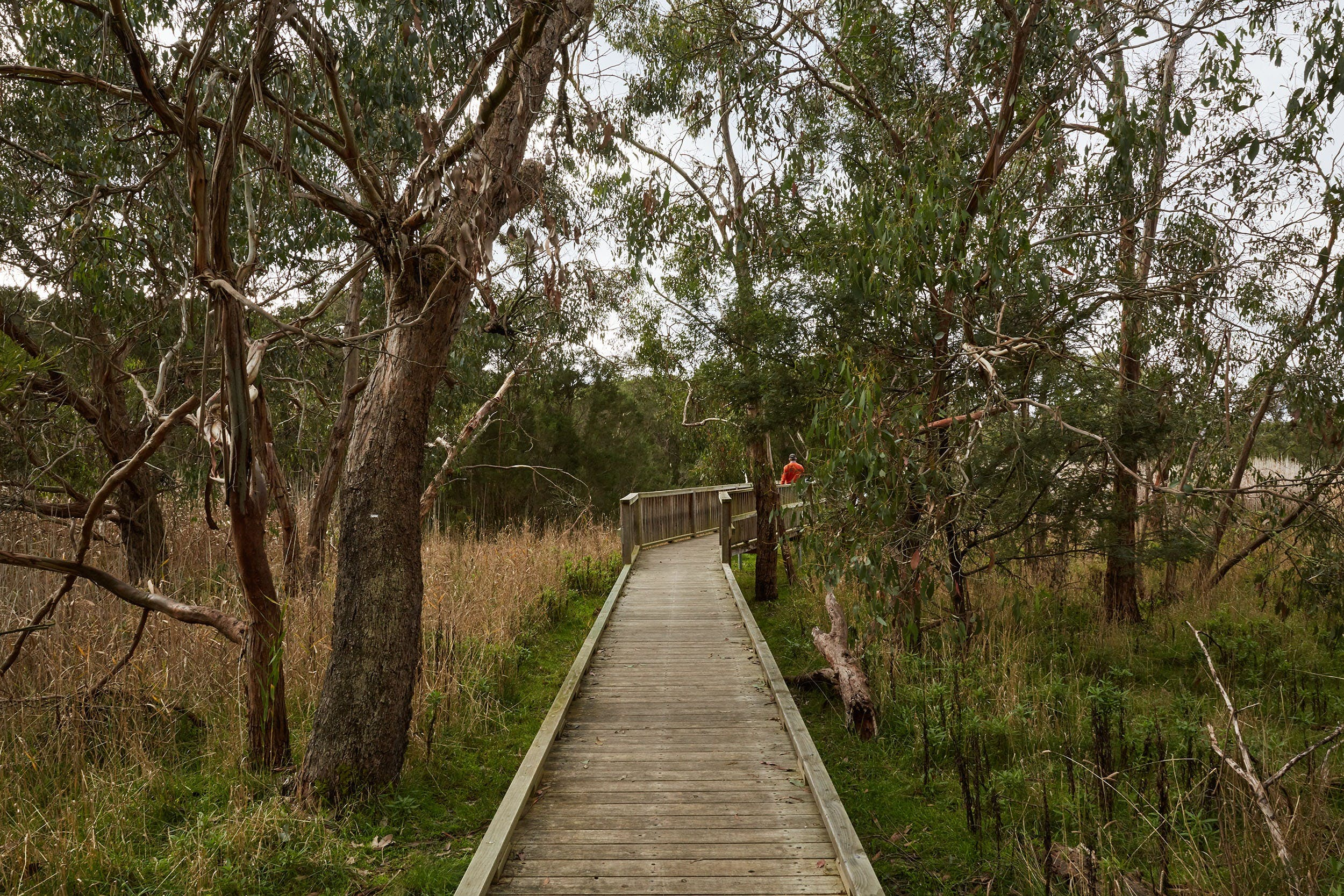 The Briars Park Walking Trails - Accommodation Mount Tamborine