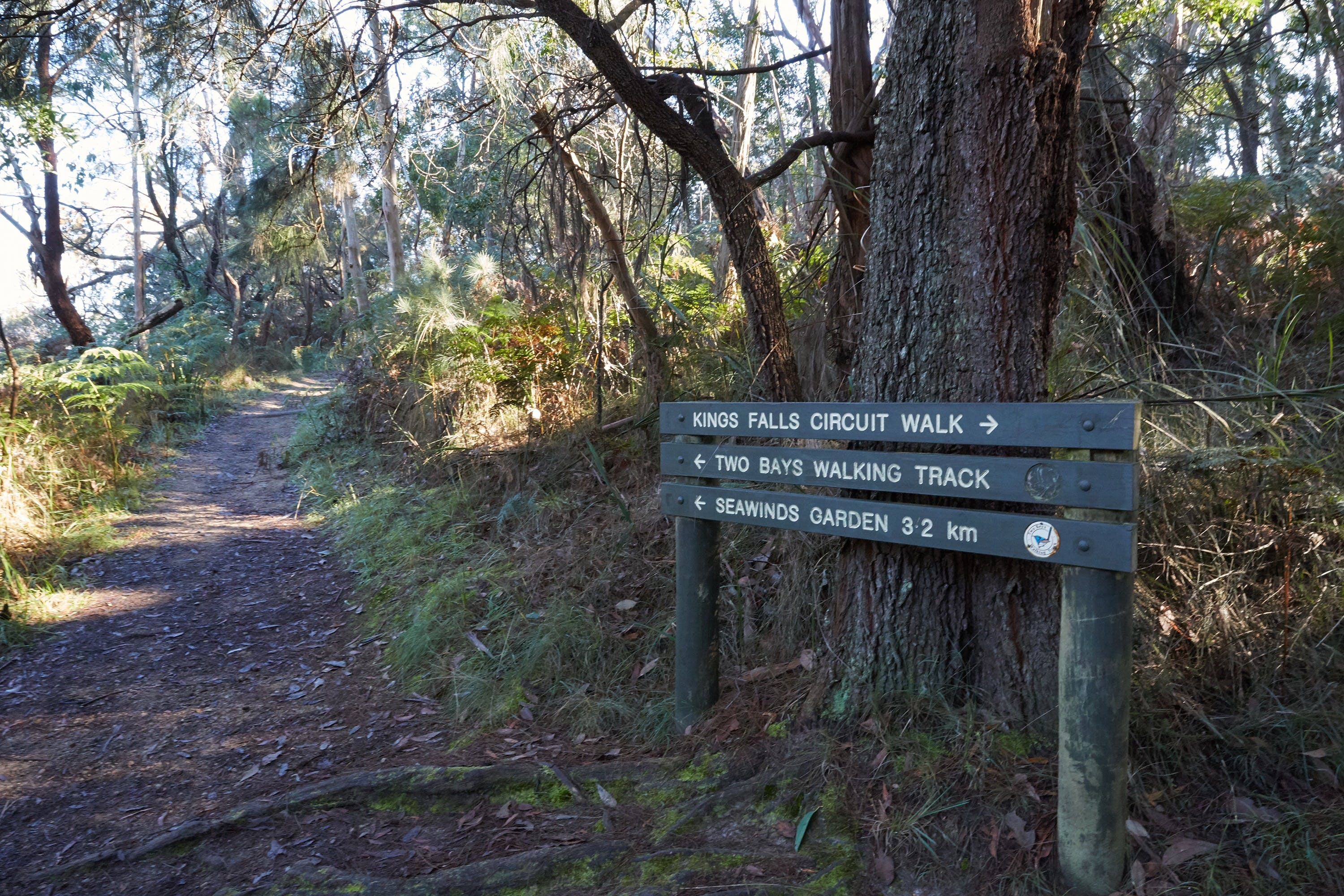 Arthurs Seat to Kings Falls Walk - Accommodation Mount Tamborine