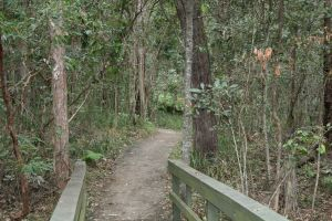 Springwood Conservation Park - Accommodation Mount Tamborine