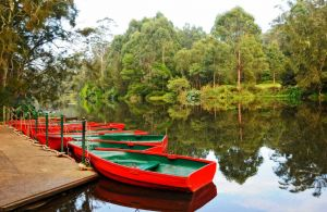 Lane Cove National Park - Accommodation Mount Tamborine